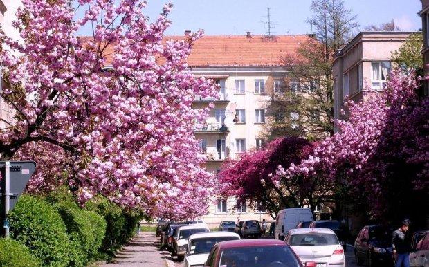 Цветущие аллеи Ужгорода